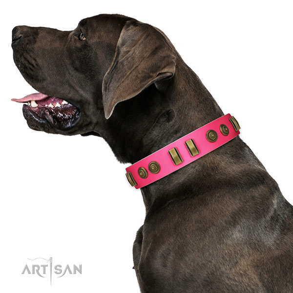 Daily use dog collar of genuine leather with trendy studs