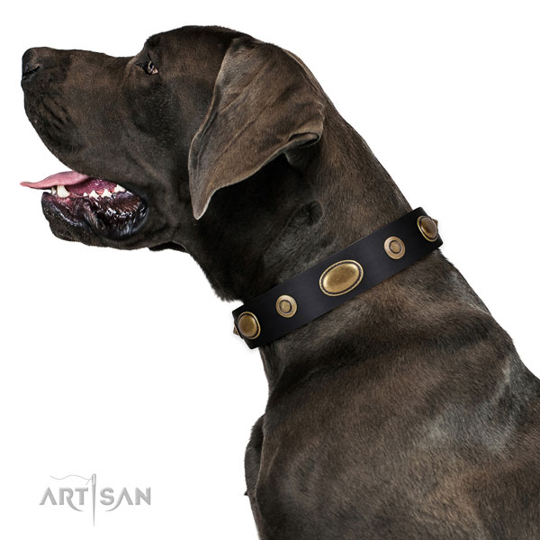 Comfy wearing dog collar of leather with exceptional studs