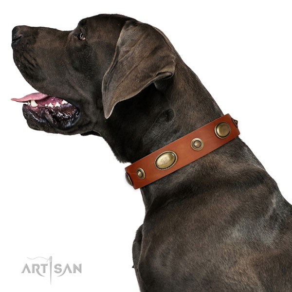 Stylish walking dog collar of natural leather with fashionable decorations