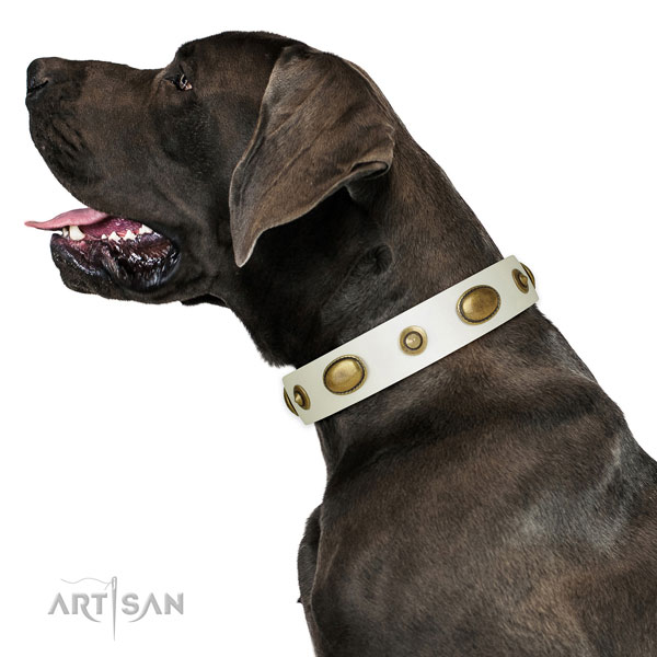 Fancy walking dog collar of genuine leather with unusual studs