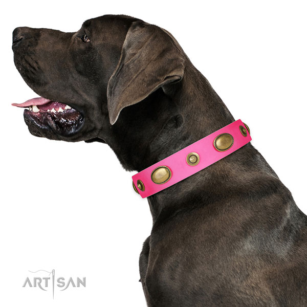 Everyday use dog collar of natural leather with inimitable studs