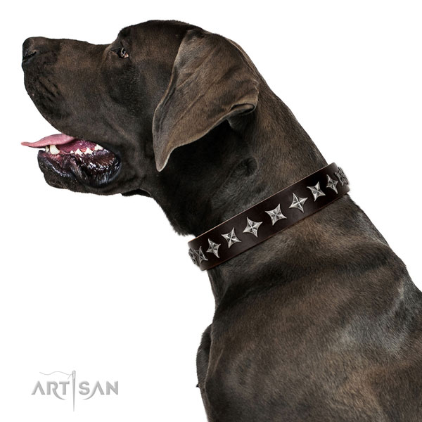Everyday use embellished dog collar of top notch natural leather