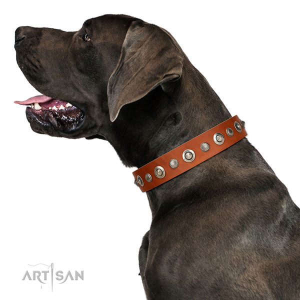 Quality full grain leather dog collar with stylish decorations