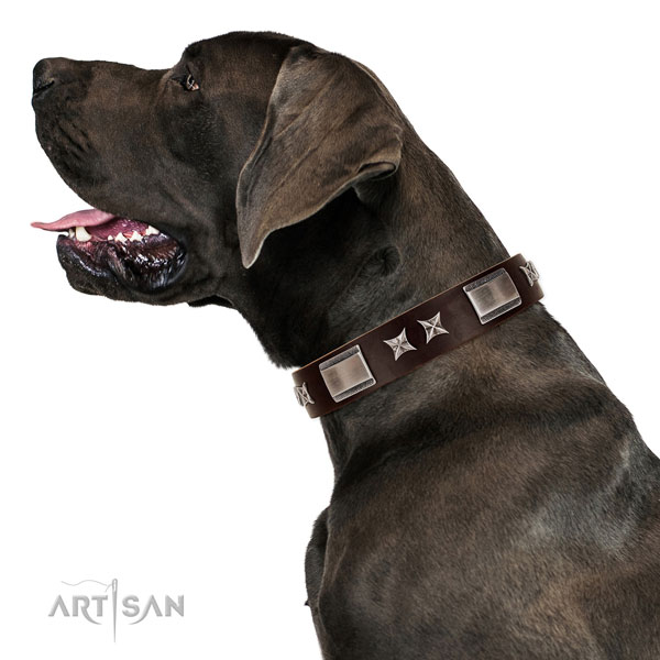 Inimitable collar of leather for your lovely four-legged friend