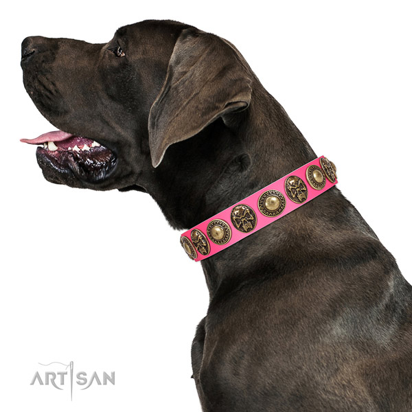 Stylish leather collar for your stylish pet