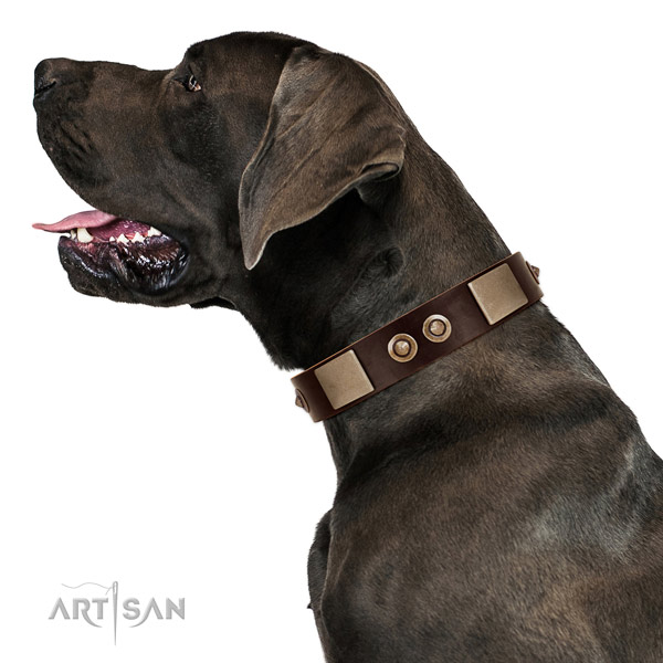 Rust resistant buckle on full grain leather dog collar for stylish walking