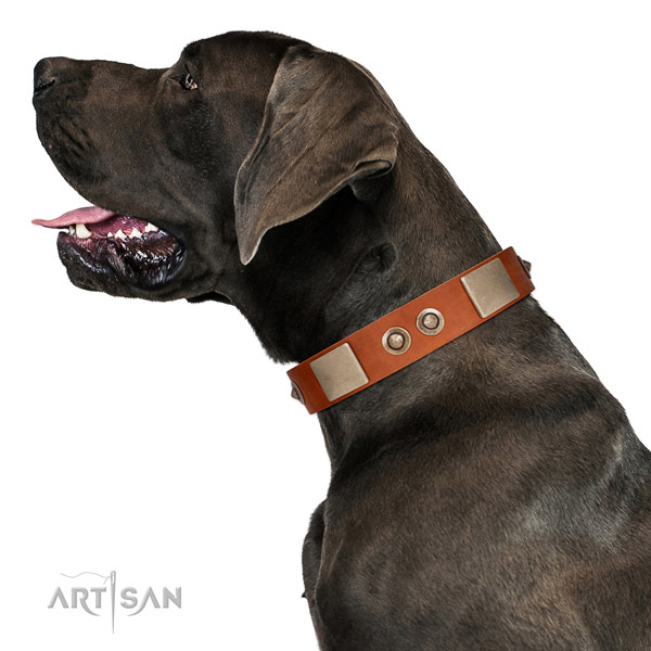 Corrosion resistant D-ring on full grain leather dog collar for easy wearing
