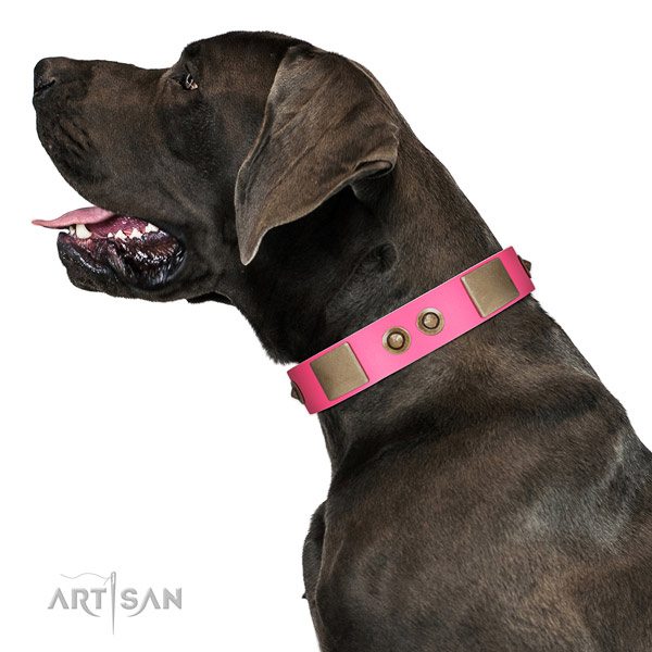 Handy use dog collar of natural leather with incredible adornments