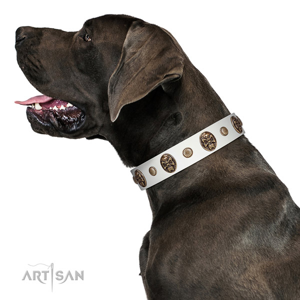 Full grain natural leather dog collar with impressive adornments