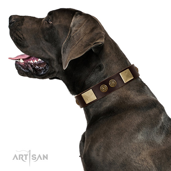 Fancy walking dog collar of leather with designer studs