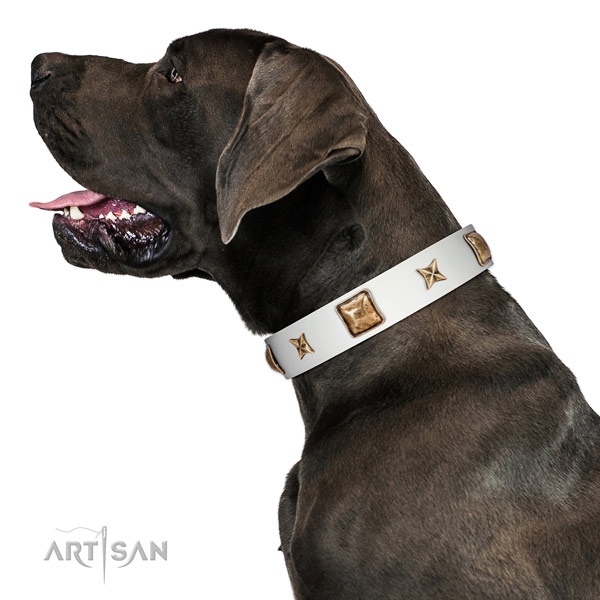 Fashionable genuine leather dog collar with studs