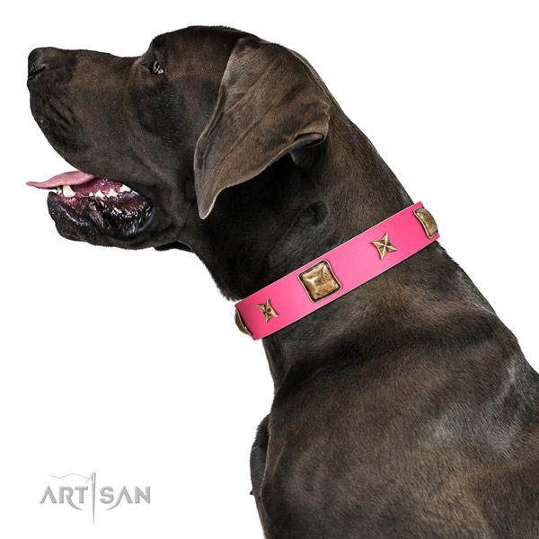 Easy wearing dog collar crafted for your beautiful dog