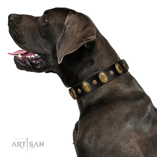 Natural leather dog collar of quality material with inimitable adornments
