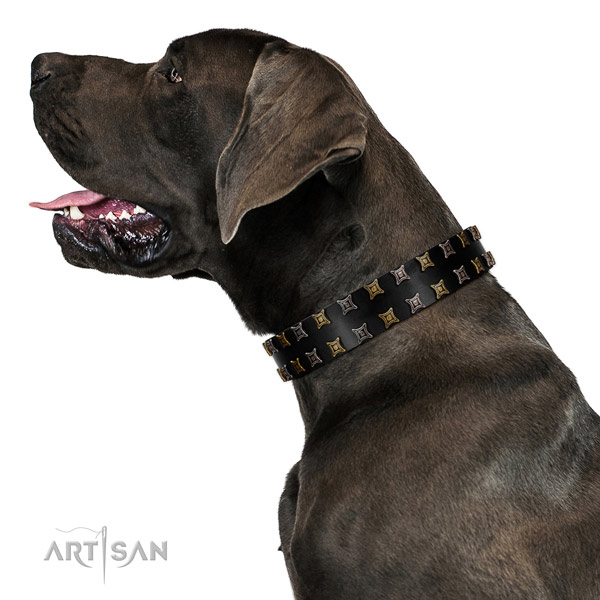 Soft to touch genuine leather dog collar with adornments for your canine