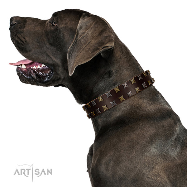 High quality genuine leather dog collar with decorations for your four-legged friend