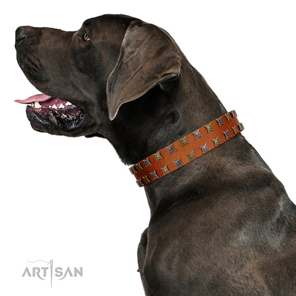 Reliable full grain genuine leather dog collar with studs for your four-legged friend