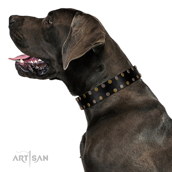 Significant full grain genuine leather dog collar with corrosion resistant adornments