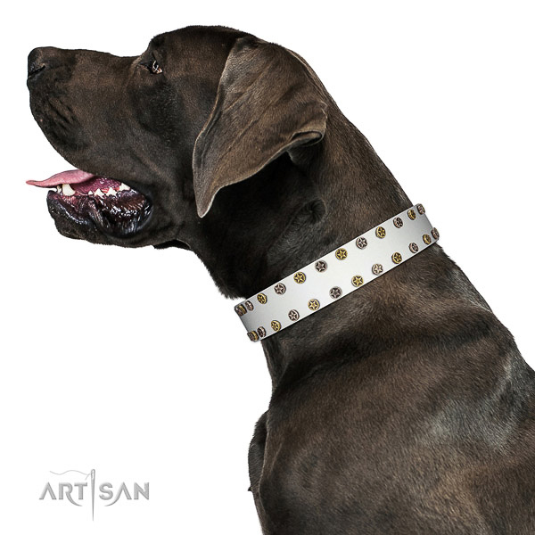 Stylish leather dog collar with rust resistant adornments