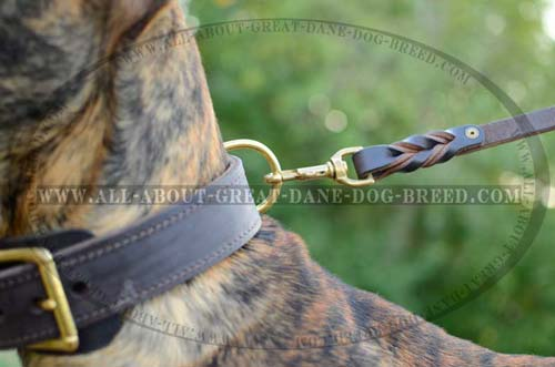 Leather Great Dane Collar with Brass Fittings