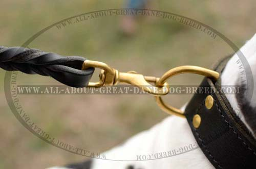 2 Ply Leather Great Dane Collar