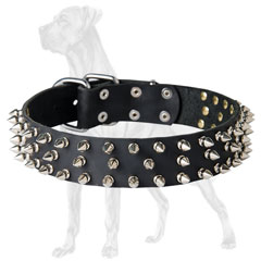 Stunning Great Dane collar with 3 rows of spikes