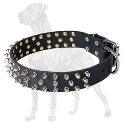 Non-toxic Great Dane collar of dog-friendly material