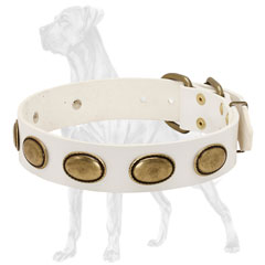 Leather Great Dane Collar Decorated with Brass Plates
