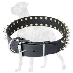 Spiked leather Great Dane with adjustable buckle
