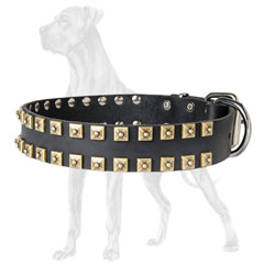 Hypoallergic Leather Great Dane Collar with Studs
