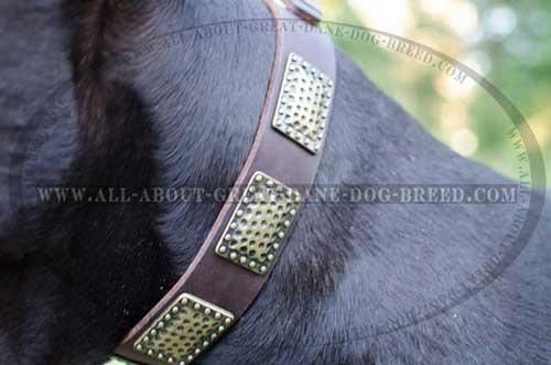 Leather Great Dane Collar with Polished Edges