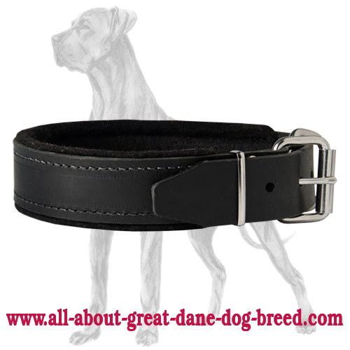 Perfect Leather Great Dane Collar