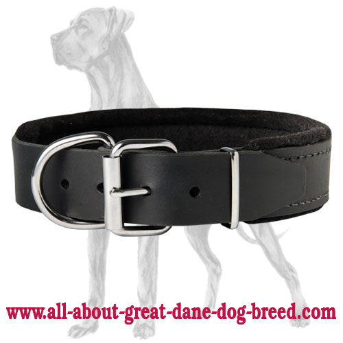 Leather Great Dane Collar Padded with Thick Felt