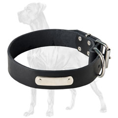 Wide Leather Collar for Great Dane