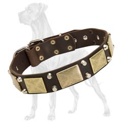 Great Dane Leather Collar Rustproof Fittings