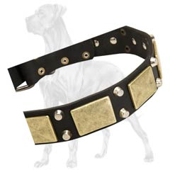 Great Dane Leather Collar Brass Plates