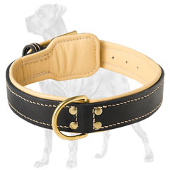Walking Great Dane Nappa padded collar