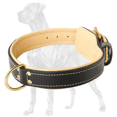 Quality Great Dane collar with fur protection plate