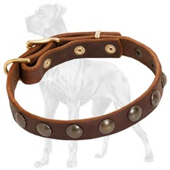 Riveted Leather Collar for Great Dane Puppy