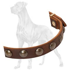 Studded Leather Great Dane Collar Dog Walking