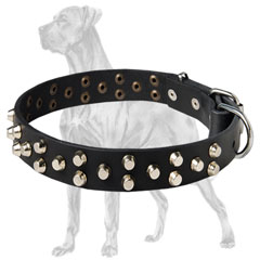 Great Dane Studded Leather Collar Rustproof Fittings