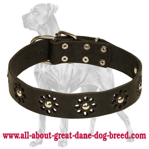 Great Dane collar with elegant flower decoration