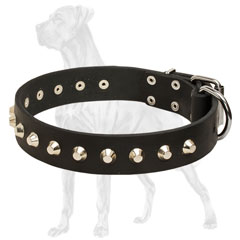 Leather Great Dane collar with nickel plated pyramids