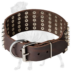Chic Great Dane collar with strong hardware