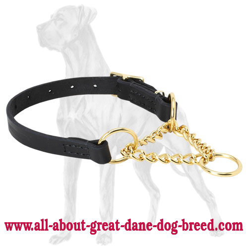 Martingale collar for Great Dane with brass plated chain