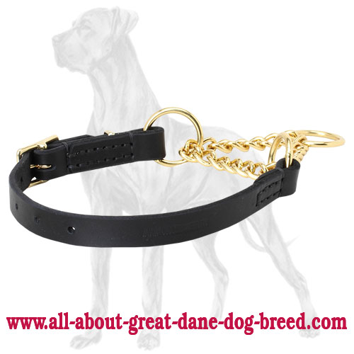 Pro training with Great Dane martingale collar