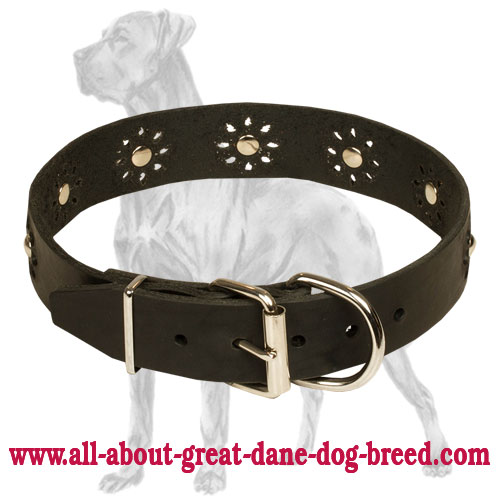 High quality collar with nickel plated hardware for Great Dane