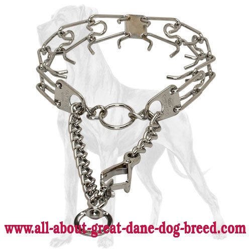 Quick behavior correction with Great Dane pinch collar