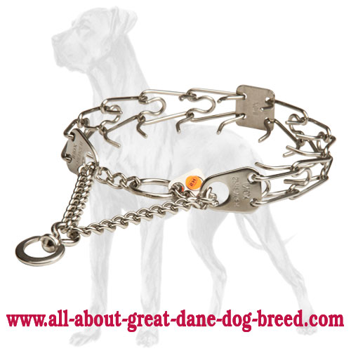 Herm Sprenger collar with blunt prongs for Great Dane