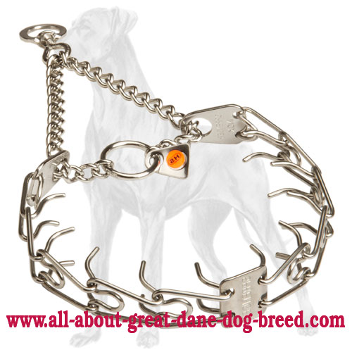 Great Dane natural upbringing with this pinch collar