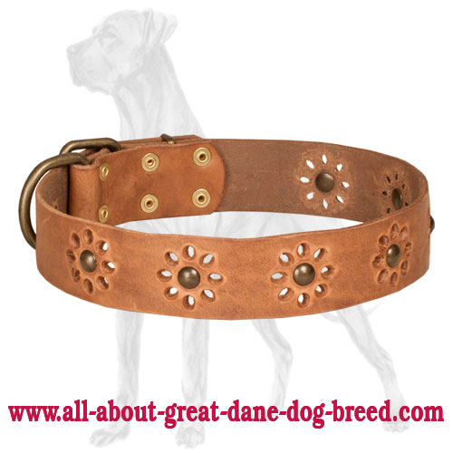 Tremendous tan leather Great Dane collar for walking